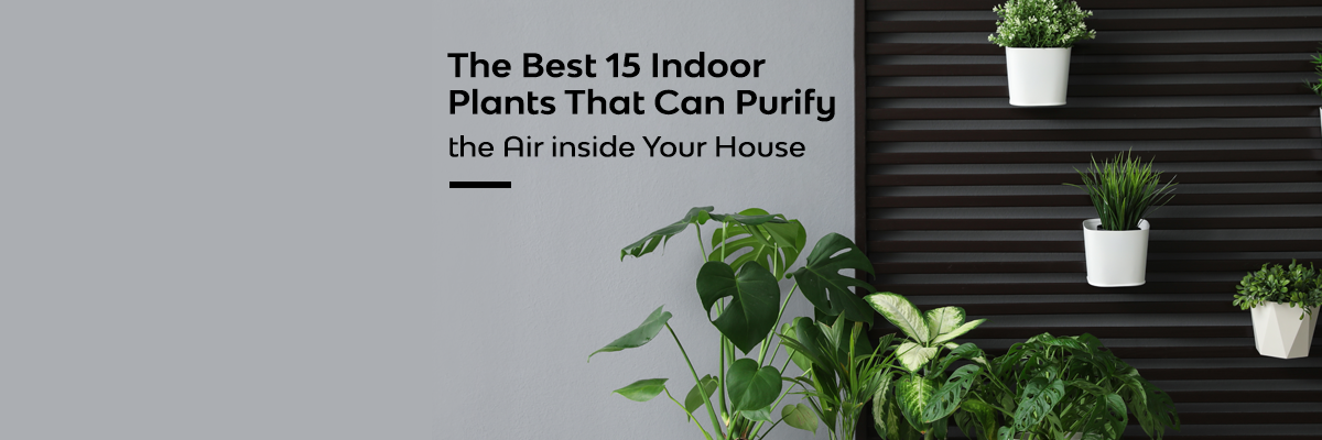 15 indoors plants that can purify the air inside your house