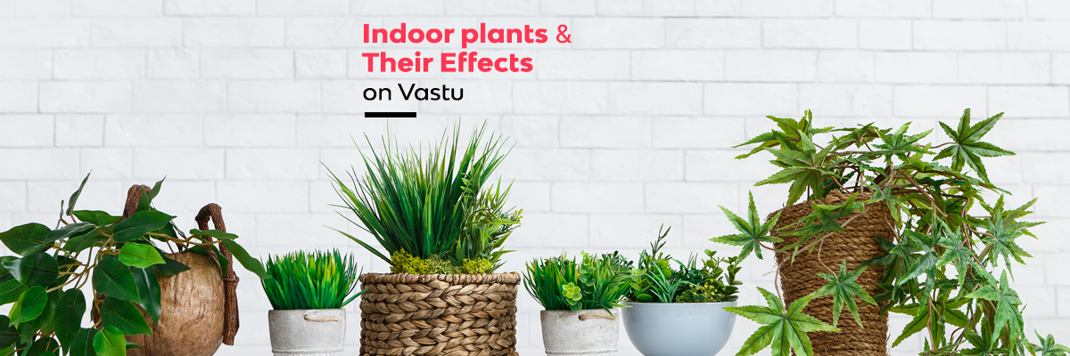 Indoor plants and Their Effects on Vastu