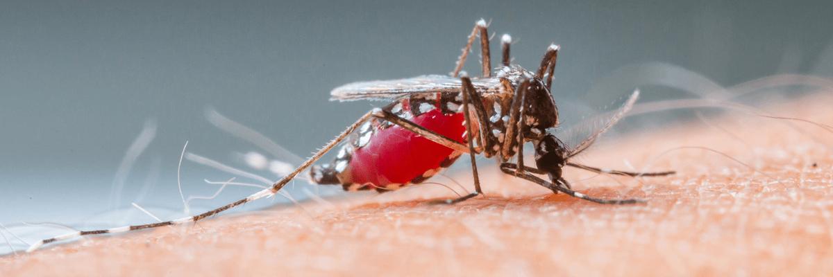 Prevent dengue NoBroker