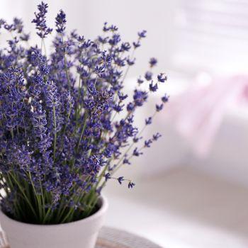 Lucky Herbs For The Garden