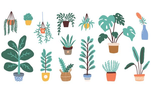 Lucky plants for home