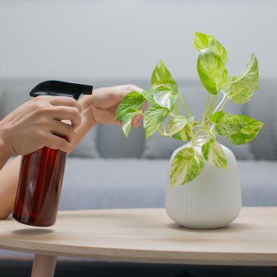 A Few Important Money Plant Vastu Tips
