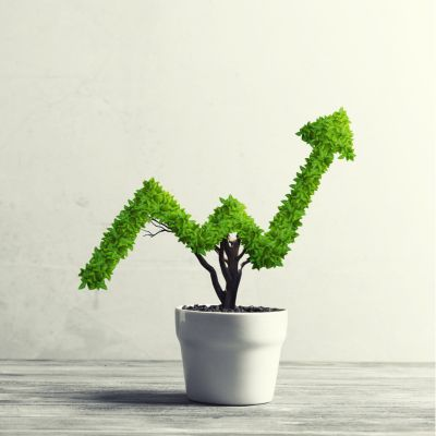 Opportune Money Plant Directions According To Vastu