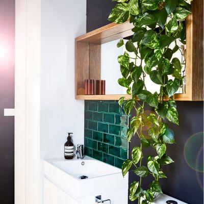The Vastu Of Money Plant In The Bathroom