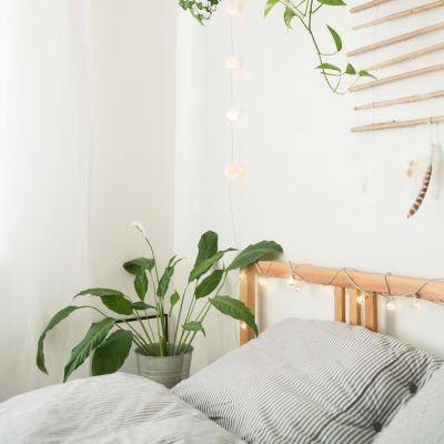 The Vastu Of Money Plant In The Bedroom