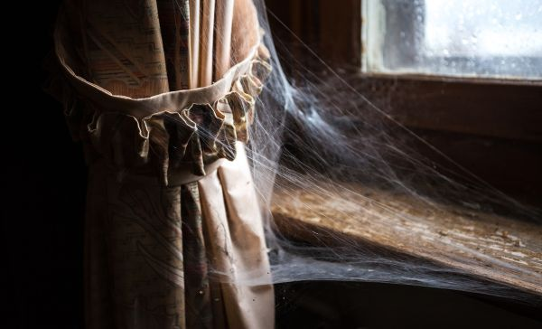 how to get rid of spiders at home